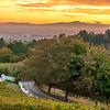 Zevenwacht Vineyards, Kuils Rivier