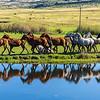 Horses running, Moolmanshoek, Free State