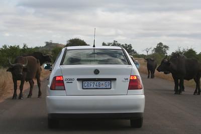 Traffic in Kruger National Park