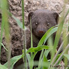 <strong><center><b>Say hello to Africa's smallest carnivore!</b></center></strong>
