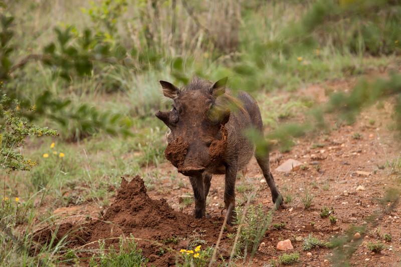 Warthog 3