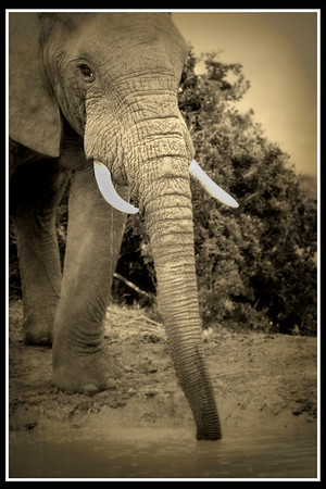 Addo Elephant Nat'l Park