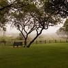 Bakubung in Fog