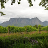 Wine Region, South Africa