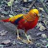 Colorful Bird, Plettenberg Bay