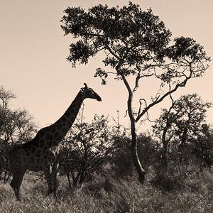 Kruger Nat'l Park