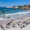 Penguins at Boulder Beach, Simonstown