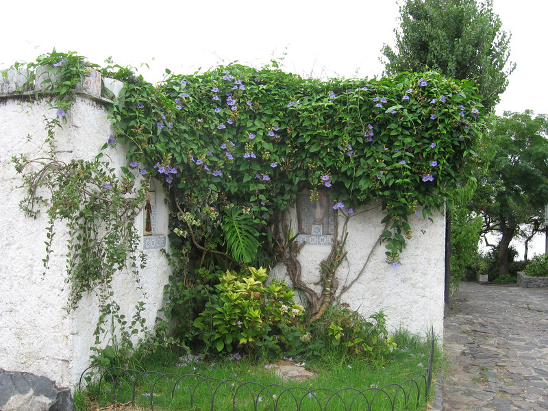 Niches with flowering vines in the historic district of Colonia.