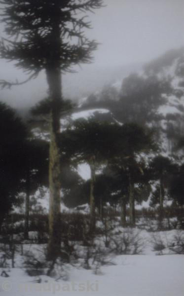 Agosto 31 : Pucon y San Martin de Los Andes