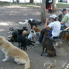 Dog-walkers and thier pooches in an off-leash area in Plaza San Martin