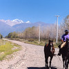 Gaucho leads horse along road near Tupungato, Argentina. Andes are in background. The area vineyards and the mountains remind me of Yakima Valley in Washington.