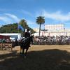 Rider at La Rural