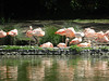 These flamingos were the best thing about the very sad zoo.