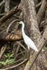 Puntarenas Costa Rica-6