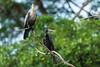 Puntarenas Costa Rica-8