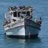 Pelican Navy Coquimbo (94282265)