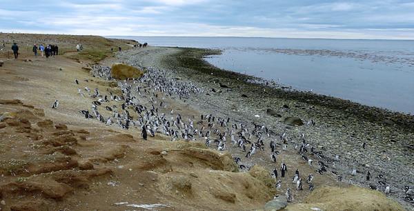 Shoreline of Magdalena Island (94388133)