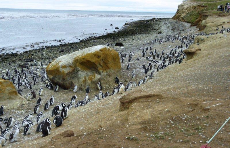 Shoreline of Magdalena Island (94388134)