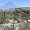 Corryocactus brevistylus & Austrocylindropuntia subulata (El Misti,  5822m)