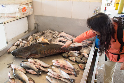 Big sturgeon-like fish in the fish market