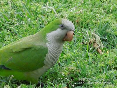 Parrots, Parakeets, Macaws