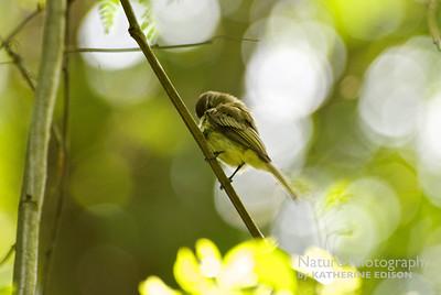 Pretty Little Bird