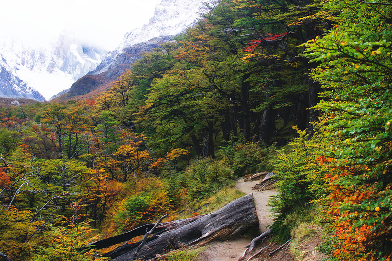 Fall colors on the hike to Laguna Torre. April 2017