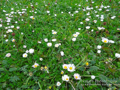 Wildflowers in the Grass