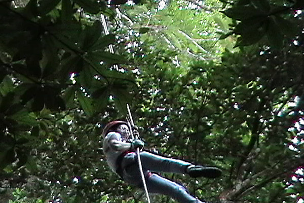 Celia repelling through trees