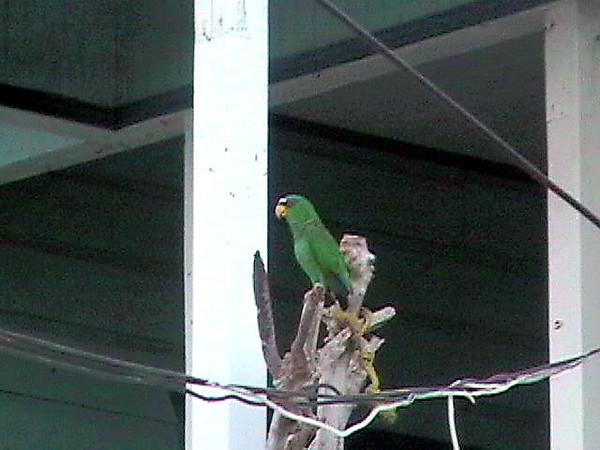 PArot on porch