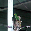 PArot on porch