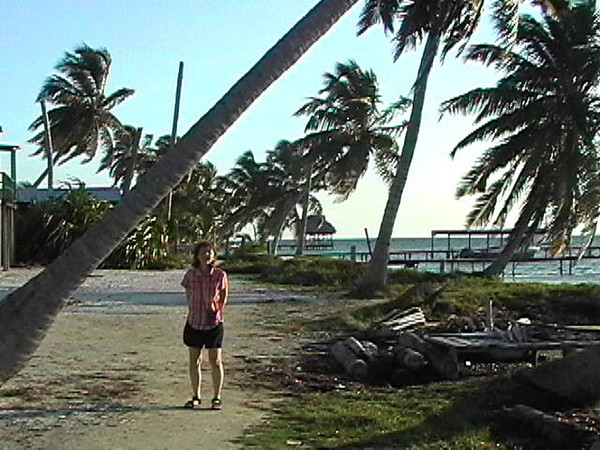Clia under leaning palm tree