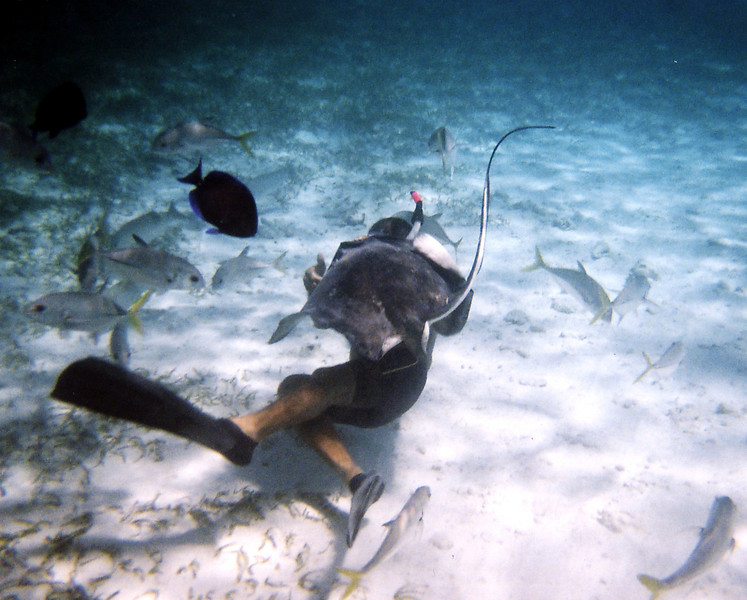Snorkeling with Stingray