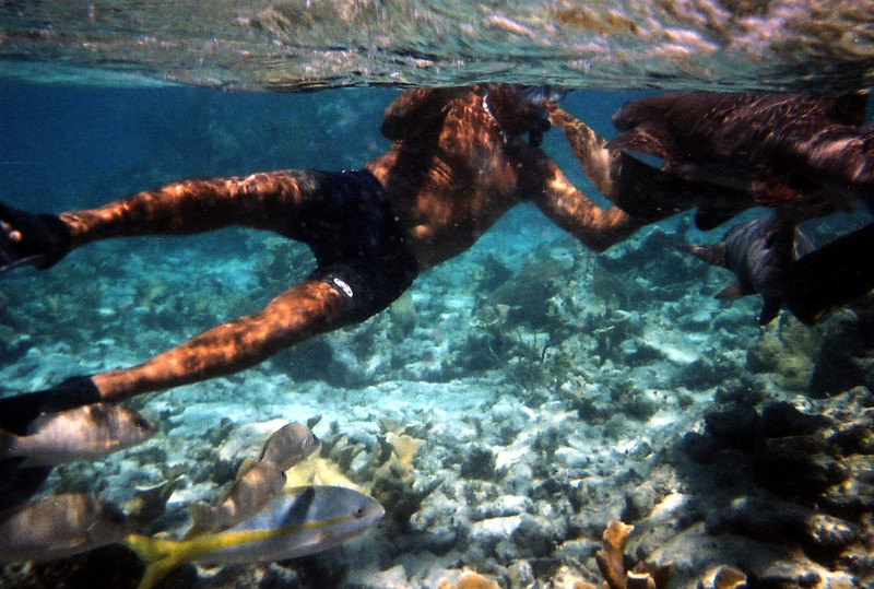 Swimming with sharks-Shallow coral
