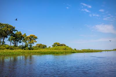 Porto Jofre, Pantanal, Mato Grosso, Brazil, 2019