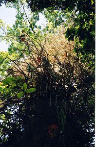 bushes