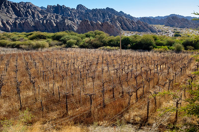 Fallow vineyard in the Quedabra de Las Flechas