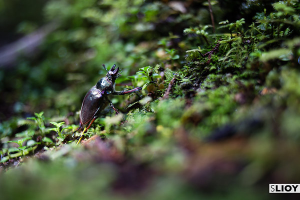 A small beetle on the Alerces interpretive trail in Chilean Patagonia's Parque Pumalin.