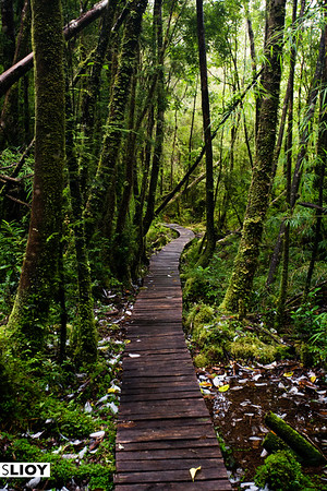 Boardwalk along the Cascada trail in Chilean Patagonia's Parque Pumalin.