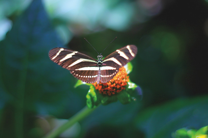 Butterfly house at the jardín botánico. August 2017