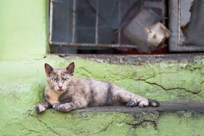 Street cat in Cartagena ... Colombia