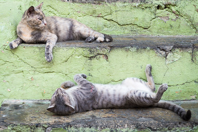 Street Cats ... Cartagena