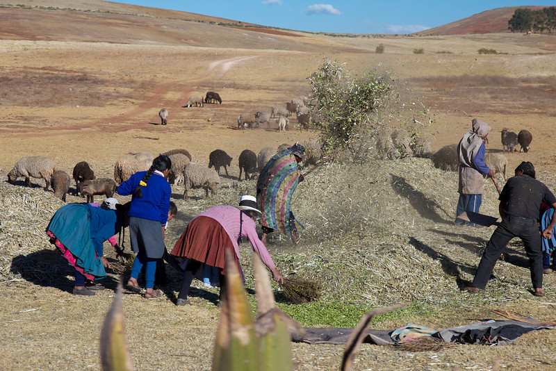 A harvest, Sacred Valley, Peru<br /> Copyright 2012, Tom Farmer