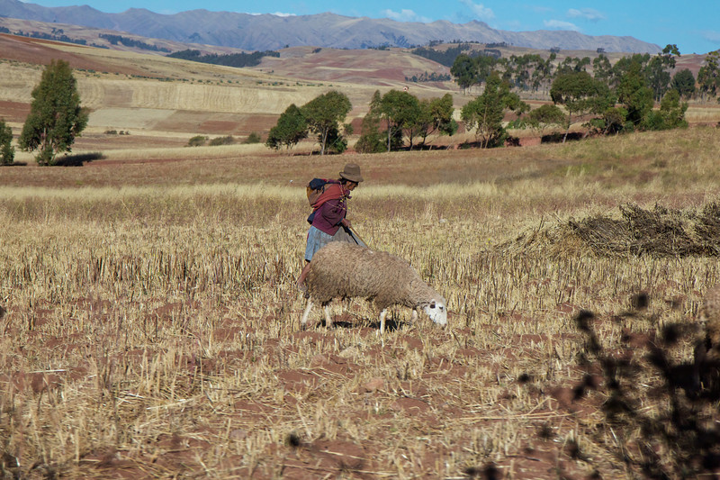 Sacred Valley, Peru, field scene<br /> Copyright 2012, Tom Farmer