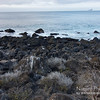 Rugged Volcanic Coastline
