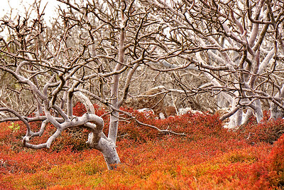North Seymour Island, Galapagos Islands
