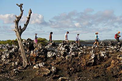 Las Tintoreras, Galapagos Islands