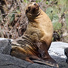 Sea Lion Pride, Floreana, Galapagos islands