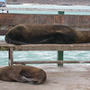003_Baltra_Island_Seals