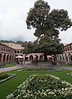 Cuzco's last Cedar tree is located in the courtyard at the Monesterio Hotel in Cuzco.